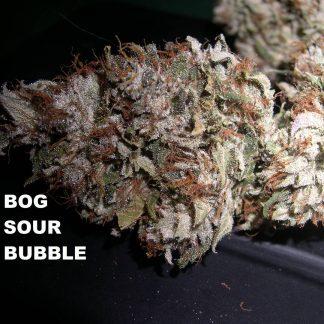 sour bubble